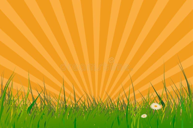 Gras mit Sonneimpulseffekt stock abbildung