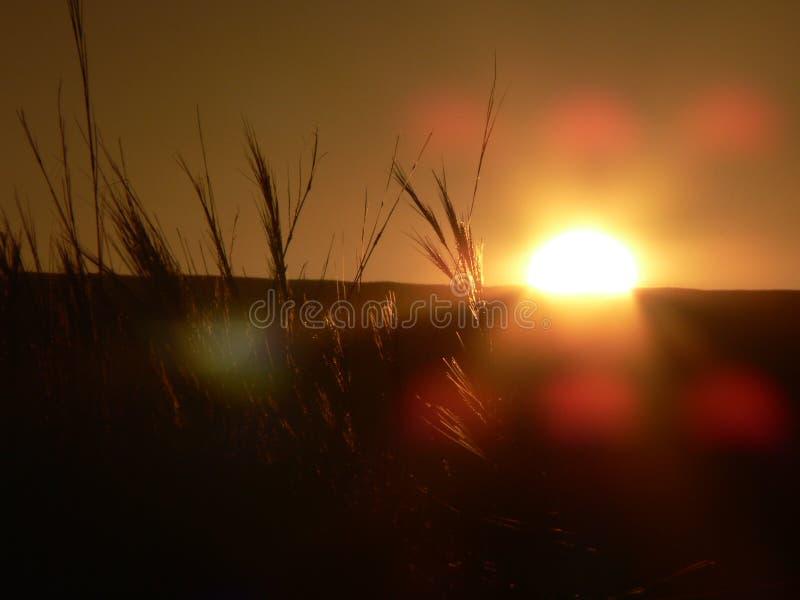 Gras mit Sonnenuntergang und Kameraaufflackern lizenzfreie stockbilder