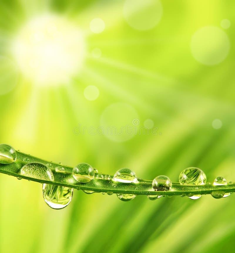 Gras mit Tautropfen und -sonne stockfotos