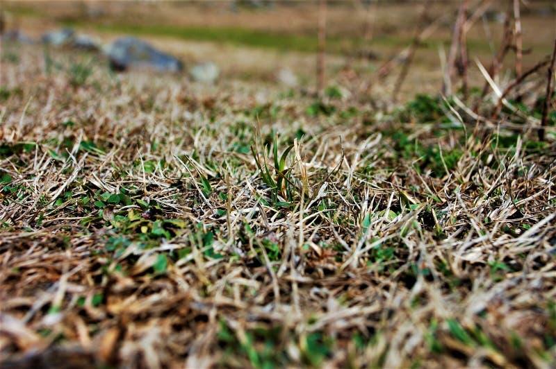 Gras mit voller Unschärfe auf dem Gebiet lizenzfreies stockfoto