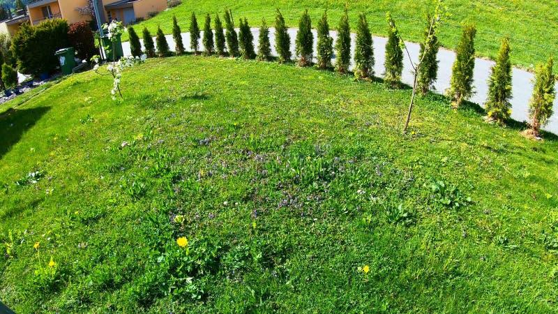 Gras mit Weihnachten stockfoto