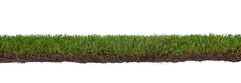 Gras mit Wurzeln und Schmutz stockfoto