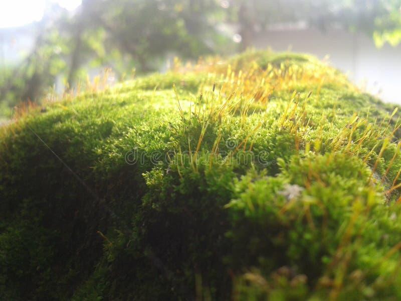 Gras of mos royalty-vrije stock fotografie