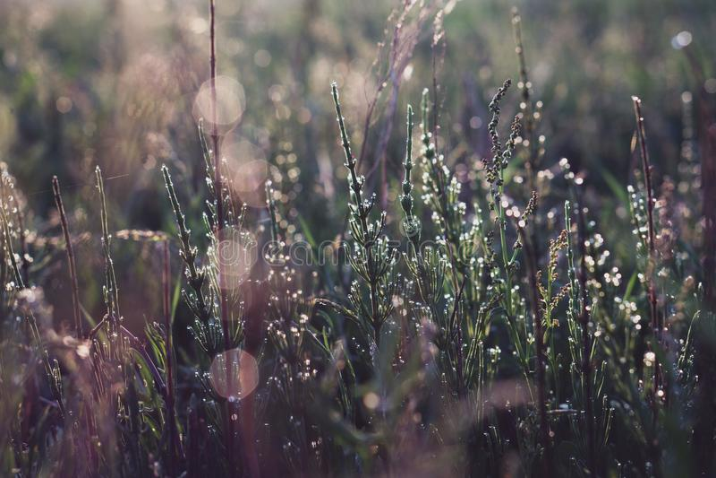 Gras nach Regen stockfotos