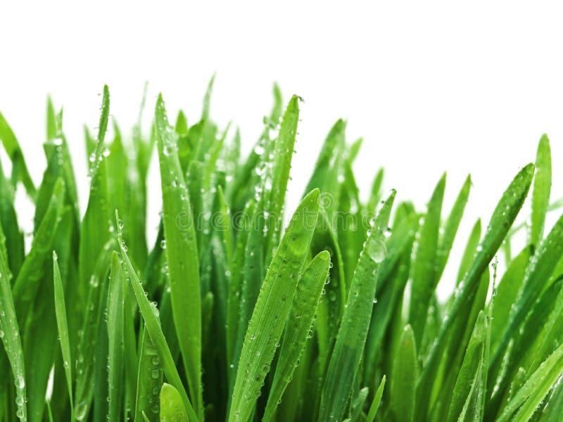 Gras nach Regen lizenzfreies stockfoto