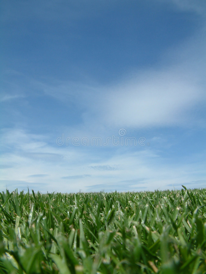 Gras-Nahaufnahme und Himmel stockfotos