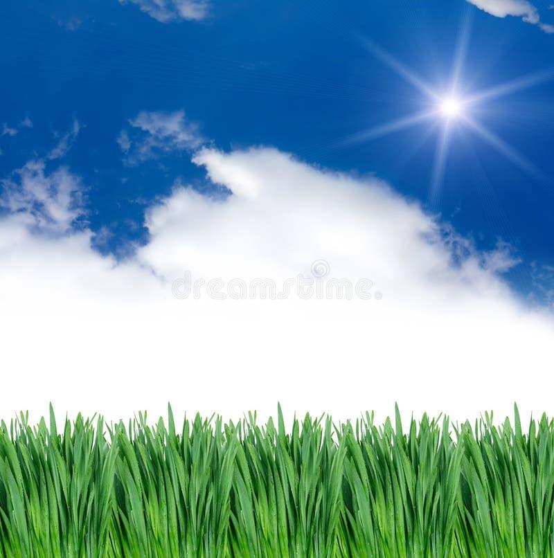 Gras onder blauwe hemel stock afbeeldingen