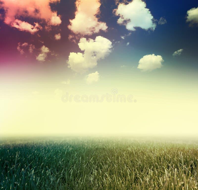 Gras onder blauwe hemel stock foto