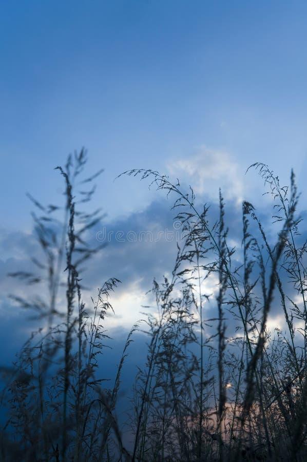 Gras onder de blauwe hemel royalty-vrije stock foto's