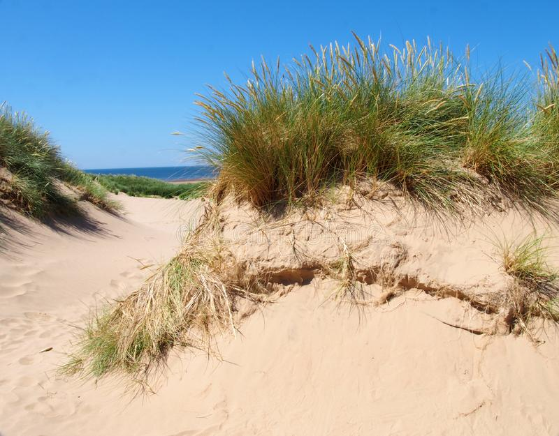 Gras op de bovenkant van zandduinen dichtbij het strand op de seftonkust in Merseyside met blauwe de zomeroverzees en hemel stock foto's