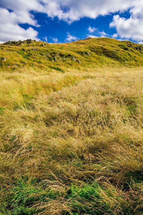 Gras op de heuvel stock foto's