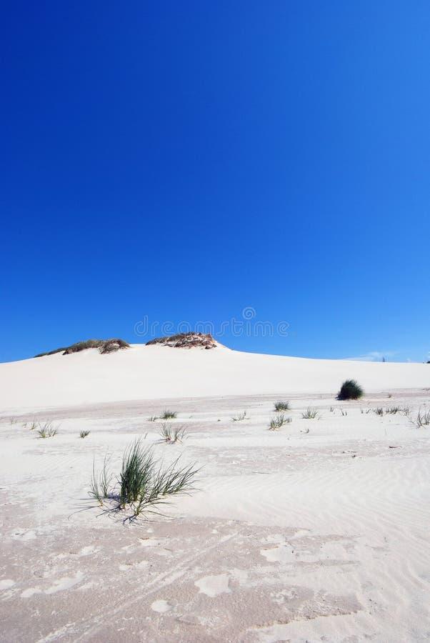 gras op de woestijn stock foto's