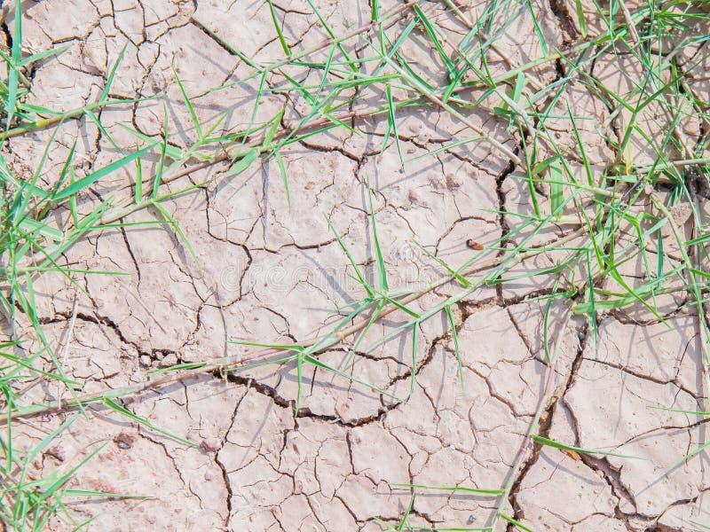 Gras op Droge gebarsten aarde royalty-vrije stock foto's