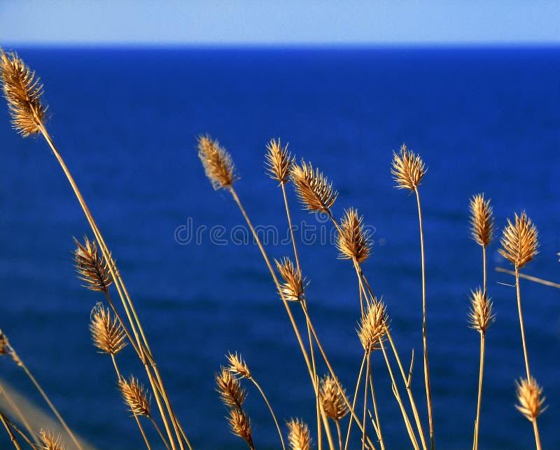 Gras op een achtergrond van het overzees royalty-vrije stock foto