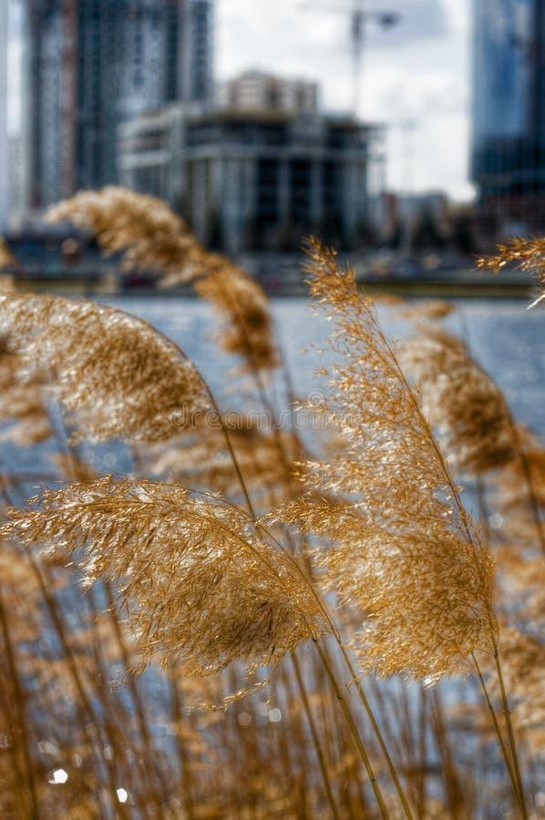 Gras op riverbank royalty-vrije stock afbeeldingen