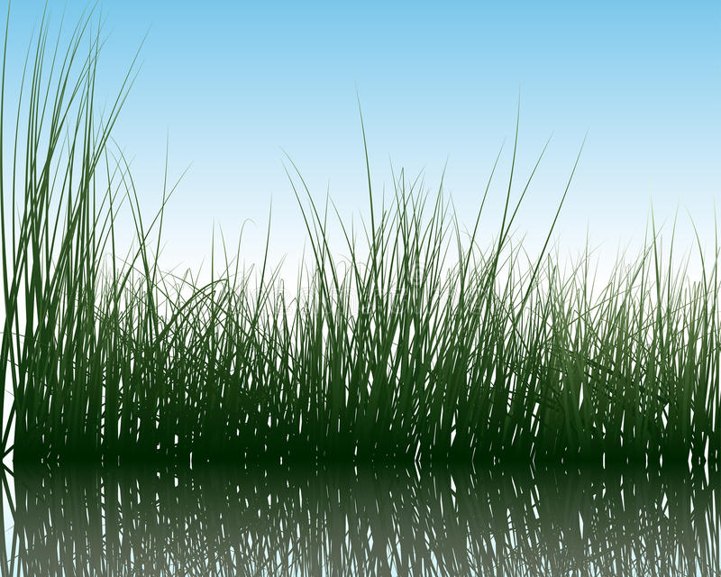 Gras op water stock illustratie