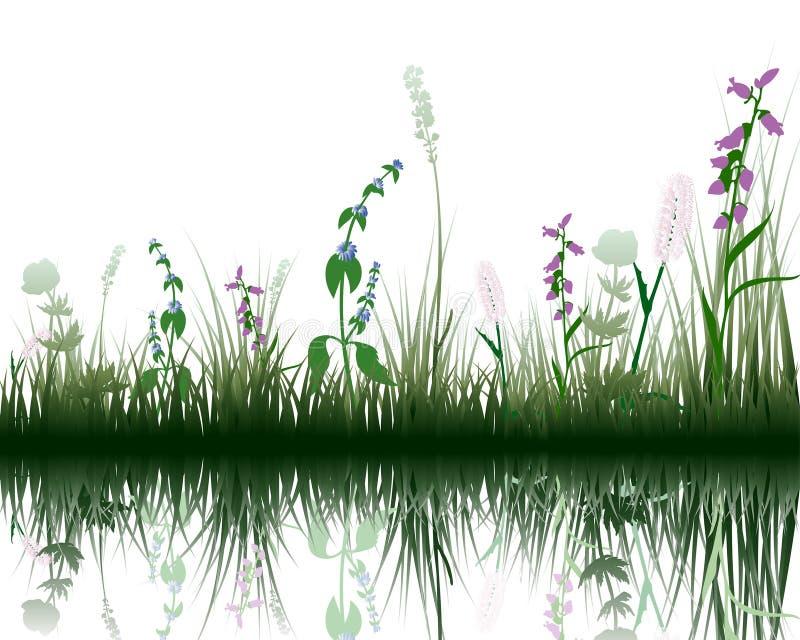 Gras op water vector illustratie