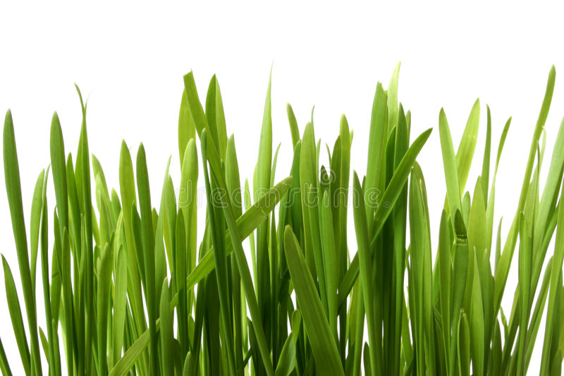 Gras op Wit stock foto