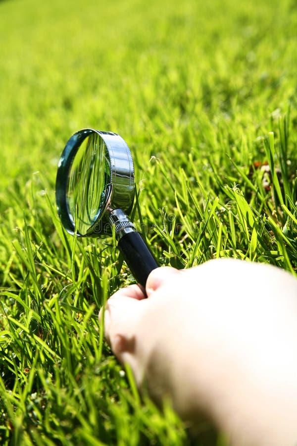 Gras prüfen stockfoto