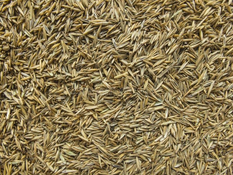 Gras-Samen-Zusammenfassung stockfotos