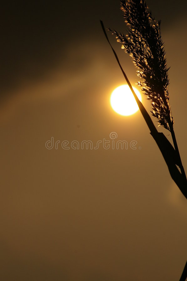 Gras-Schattenbild lizenzfreie stockfotos