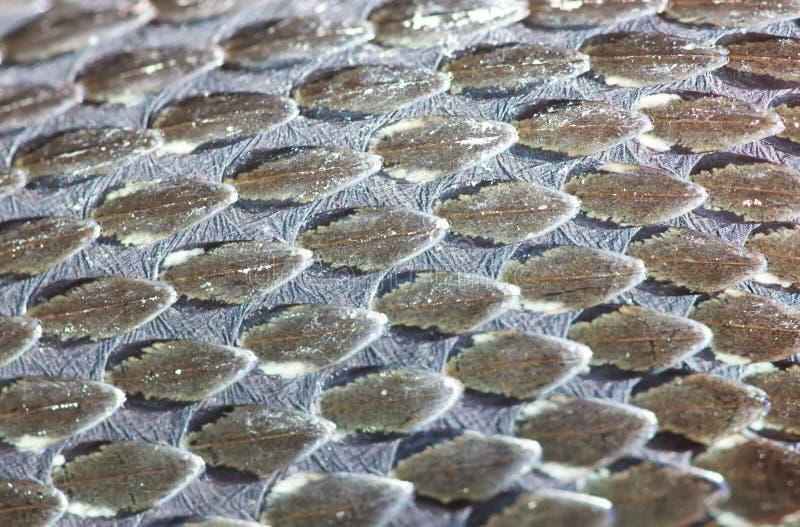 Gras-Schlangenhaut, Reptil, Makro lizenzfreies stockbild