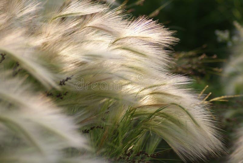 Gras am Sommer. lizenzfreie stockfotos