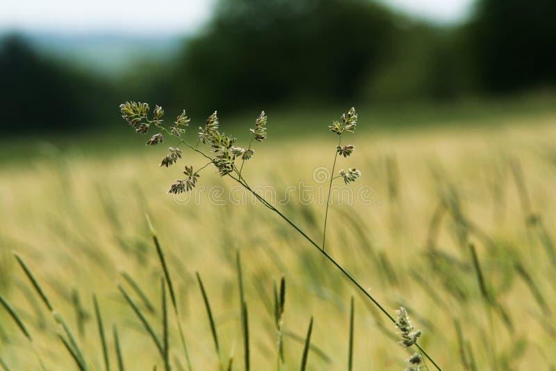 Gras-Sommer-Feld lizenzfreie stockfotos
