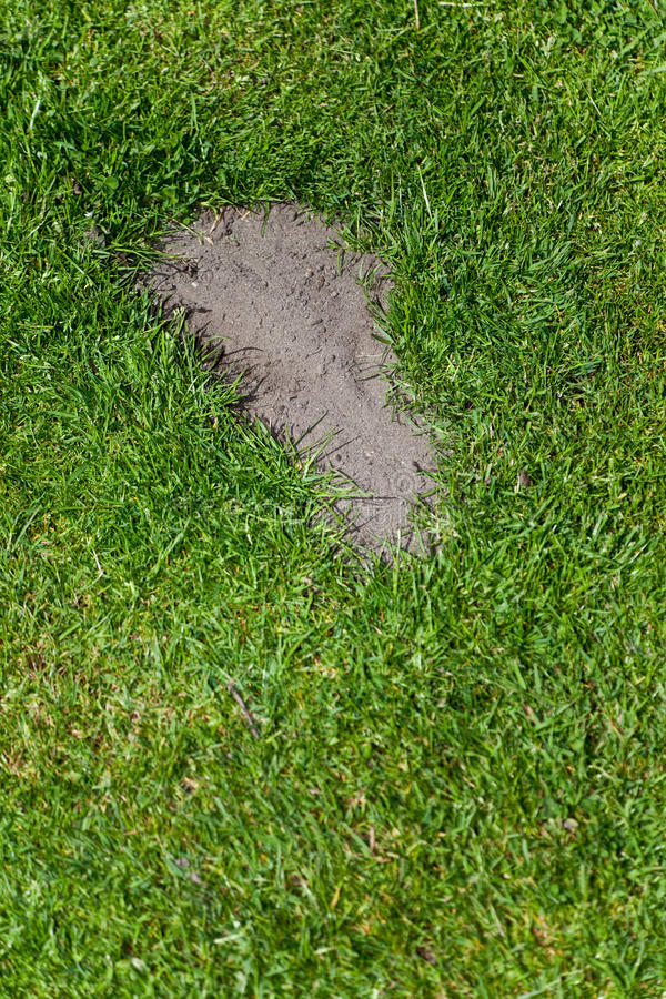 Gras und Abdruck stockfotos