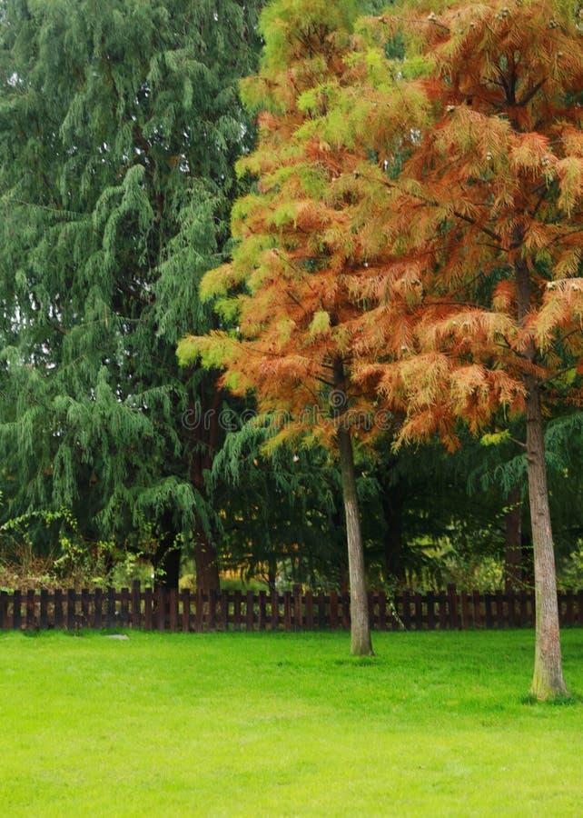Gras und Baum auf Herbstpark stockfotos