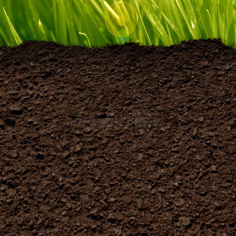 Gras und Boden lizenzfreie abbildung