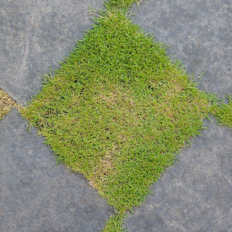 Gras-und Kies-Beschaffenheit lizenzfreie stockfotografie