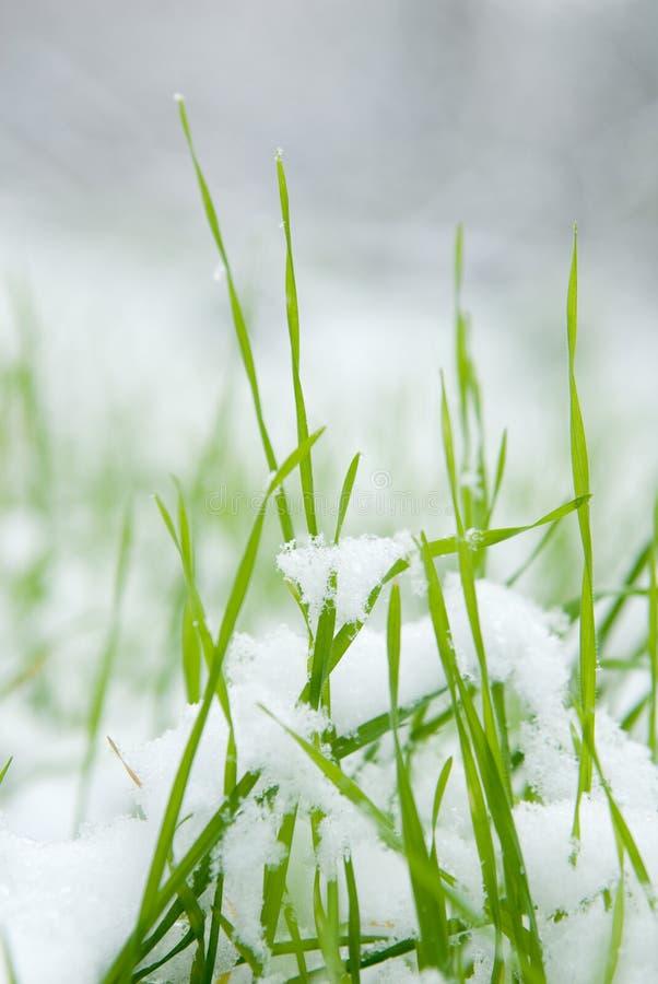 Gras und Schnee lizenzfreies stockfoto