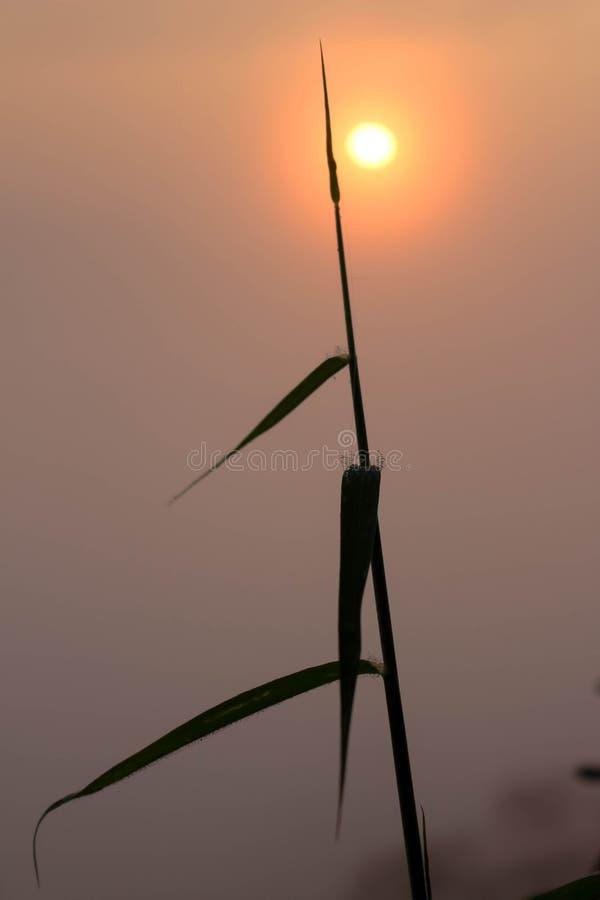 Gras und Sonnenaufgang, die hoch glüht stockfoto