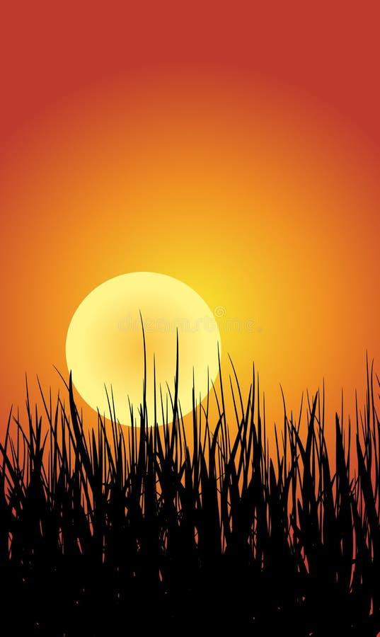 Gras-und Sonnenuntergang-Hintergrund lizenzfreie abbildung