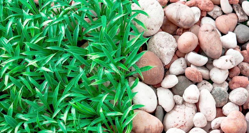 Gras und Stein stockfotografie