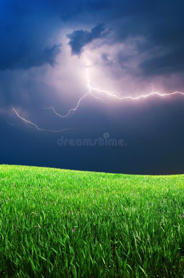 Gras und tiefer blauer Himmel stockfotografie