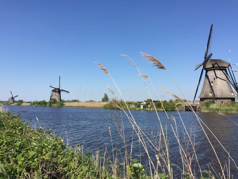 Gras und Windmühlen lizenzfreie stockfotos