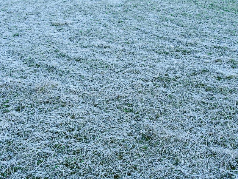 Gras unter dem Hoar-frost stockbilder