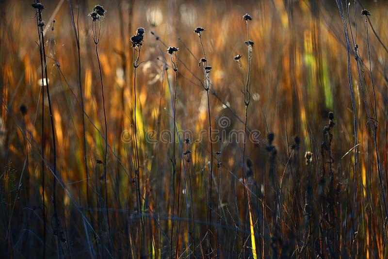 Gras van de textuur het droge herfst royalty-vrije stock foto's
