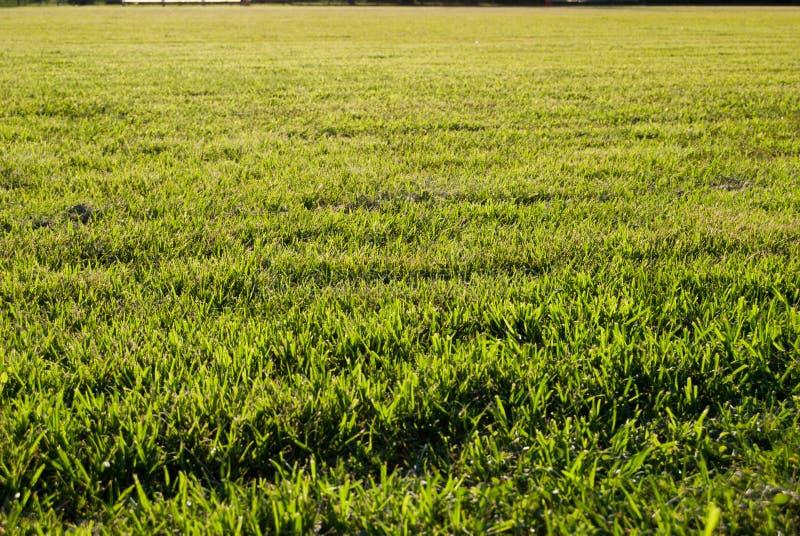Gras van voetbalgebied royalty-vrije stock foto's