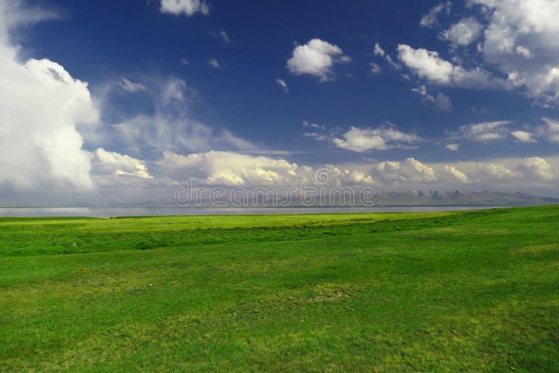Gras verde plano hermoso en Kyrgystan, lago Kol de la canción imagen de archivo