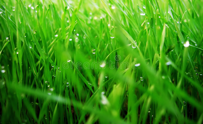 Gras verdi fotografie stock