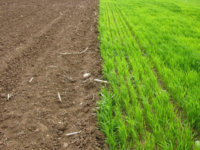 Gras versus Land stock afbeeldingen