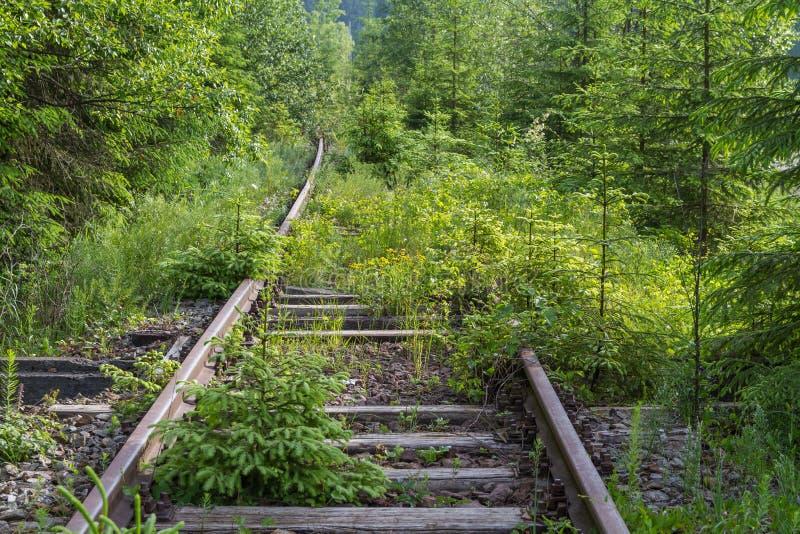 Gras verts abandonnés vieux par chemin de fer photographie stock
