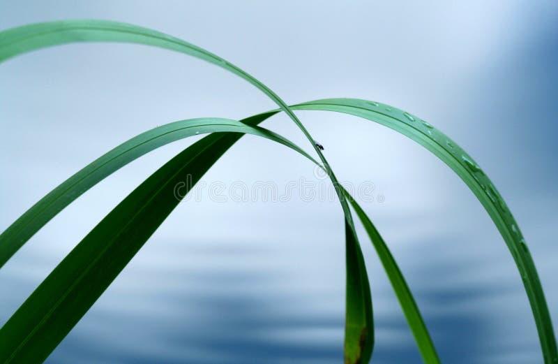 Gras in water royalty-vrije stock fotografie