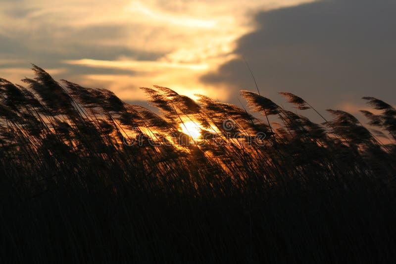 Gras in wind royalty-vrije stock foto's