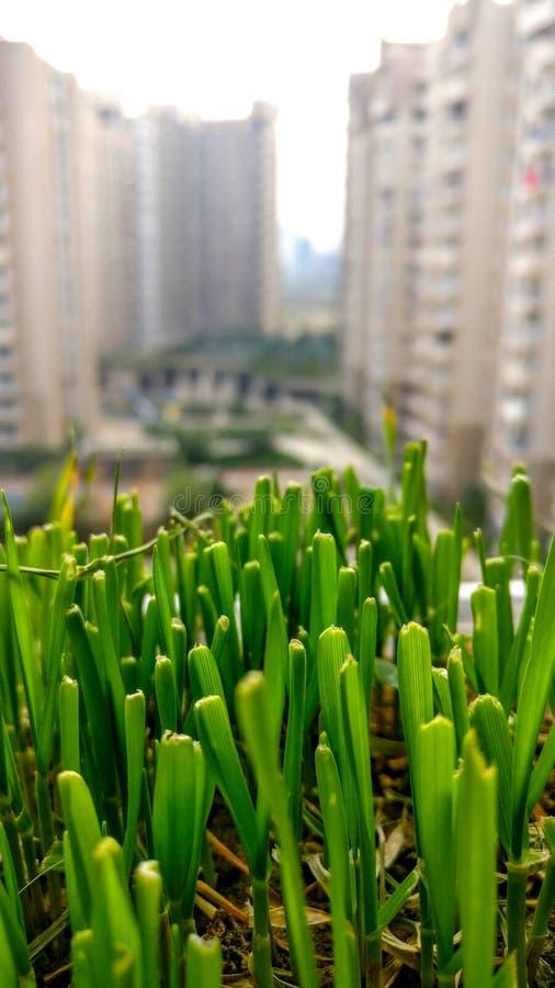 Gras zwischen einem konkreten Dschungel Nahaufnahmeporträt lizenzfreies stockfoto