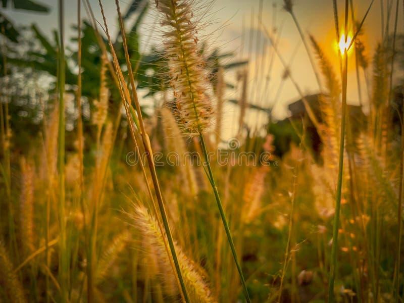 Grasa borrosa y flor de sol por la noche imagenes de archivo