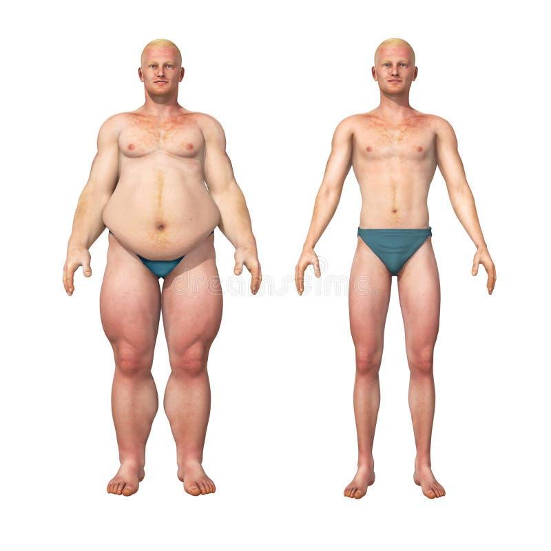 Grasa del hombre para enrarecer la transformación de la pérdida de peso ilustración del vector